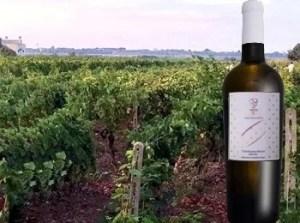 Chardonnay Tenute Tocci