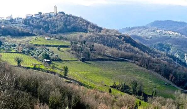Greco di Tufo, Oro d'Irpinia, Vino come cultura, economia, turismo. Arrivederci al 14 e 15 Giugno 2019!