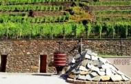 Ar.Pe.Pe. e i suoi vini da nebbiolo arrampicato sulle rocce