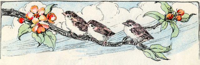 God Feeds the Birds Matthew 6:26