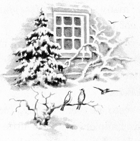 Winter scene of snow, house window, evergreen and birds