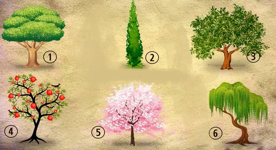 Test della personalità: quale albero pianteresti nel tuo giardino?