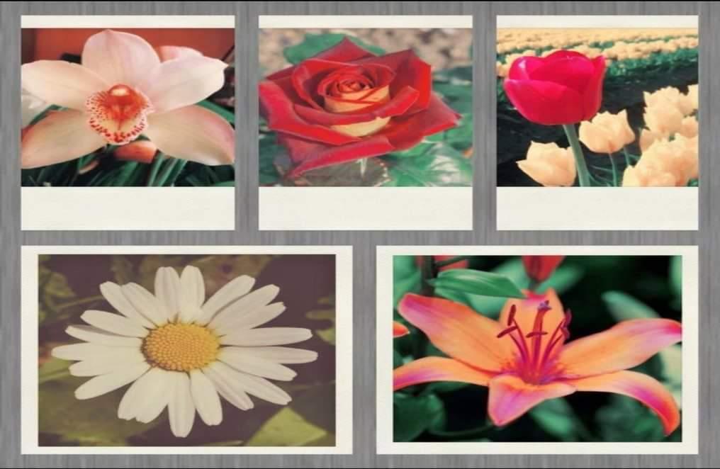 Scegli un fiore e scopri il lato profondo della tua personalità