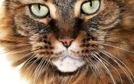 ANIMALI: TORNA SUPERCATSHOW, PERCHÉ IO SO' IO E VOI NON SIETE UN GATTO