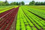 AGRICOLTURA, LA REGIONE LAZIO APPROVA LA LEGGE SUI BIODISTRETTI