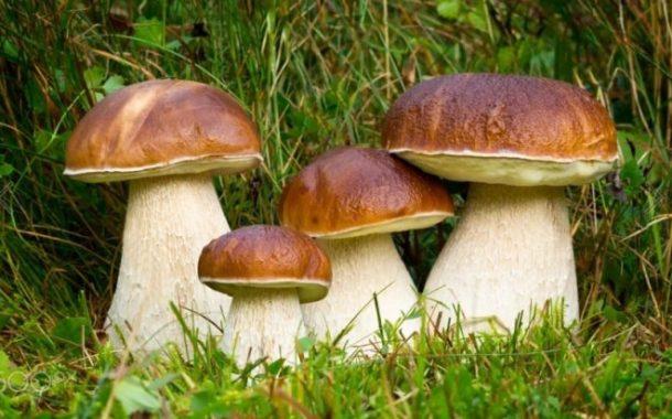 La raccolta dei funghi nei Castelli Romani: qualche piccolo consiglio