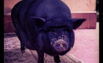 animali | lavocedelcarro.it