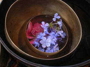 fiori di bach   lavocedelcarro.it