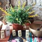 aromaterapia | lavocedelcarro.it