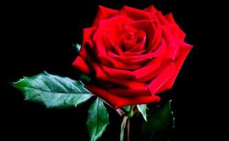 rosa | lavocedelcarro.it