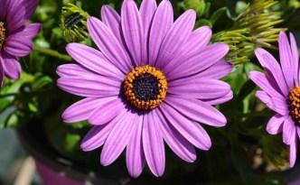 fiore | lavocedelcarro.it