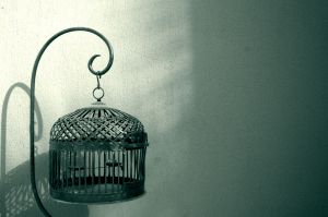 Luciano Canova – Una gabbia andò a cercare l'uccello
