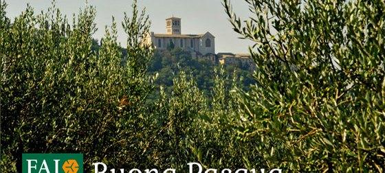FAI: Storie di Primavera e ramoscelli d'ulivo pasquali