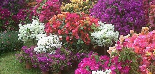 Primavera alla Landriana, la festa della bellezza dei giardini