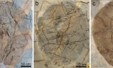 """La miniera fossile di Bolca e le nuove """"pescate"""" dall'Eocene"""