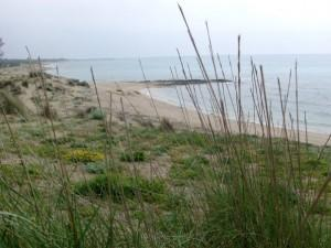 Conclusa conferenza servizi per parco dune Campomarino