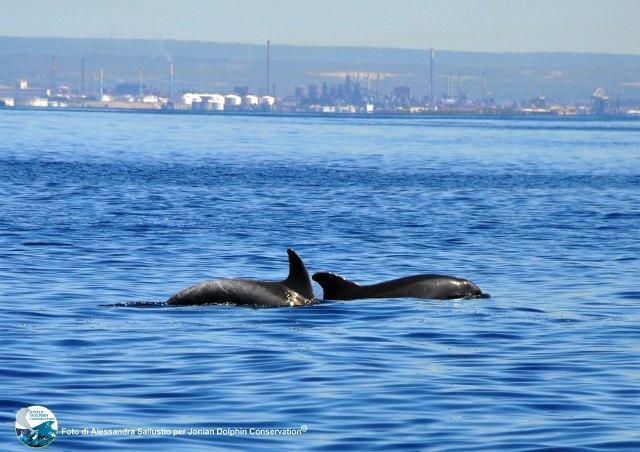 Le terre dei delfini: un progetto turistico integrato per taranto