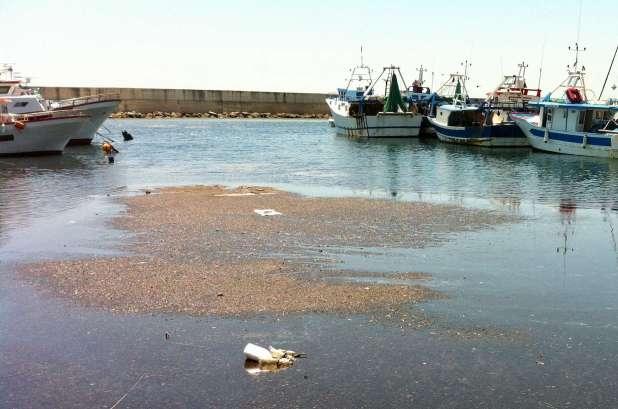 Porto di Campomarino: il Tar accoglie il ricorso promosso da Torre Moline. Sarà la Regione Puglia ad intervernire del dragaggio