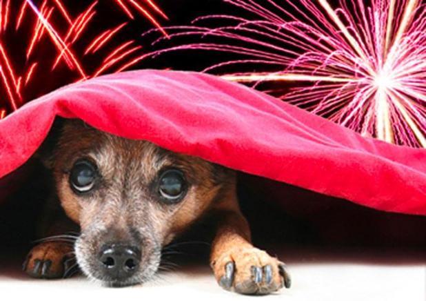 Proposta de La Voce di Maruggio: Fuochi d'artificio senza botti, lo spettacolo che non fa male agli animali