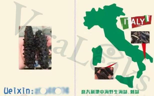 La denuncia di VeraLeaks. Cavallucci marini e oloturie: l'illecito China Export che parte dai mari di Taranto