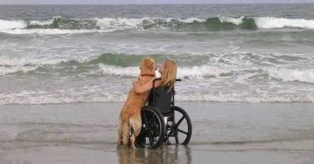 """Cani da assitenza. Quando l'aiuto del """"fedele amico"""" ti può cambiare la vita"""