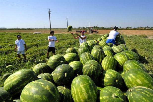 Taranto, contributi per il trasporto degli operai agricoli presso la sede di lavoro