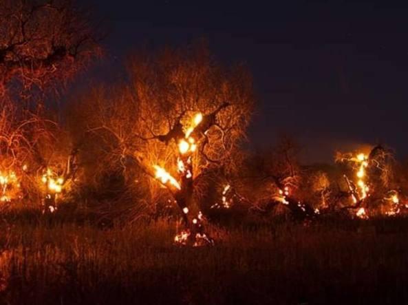 Paesaggio spettrale nel Salento: Ulivi in fiamme, in un mese  4mila alberi ridotti in cenere