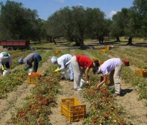 Lizzano, titolare azienda agricola costringeva le operaie ad avere rapporti sessuali. Arrestato 56enne