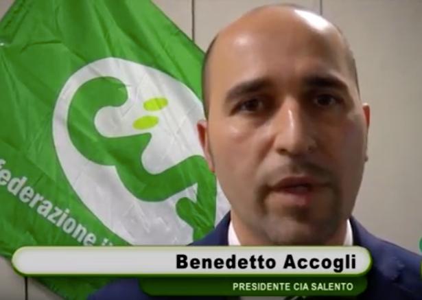 """Rigenerazione olivicola, Cia Salento: """"Troppe aziende sono state escluse"""""""