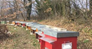 """Miele di Puglia, 19mila alveari e 400 apicoltori: nasce """"Apicoltura"""" per la svolta"""