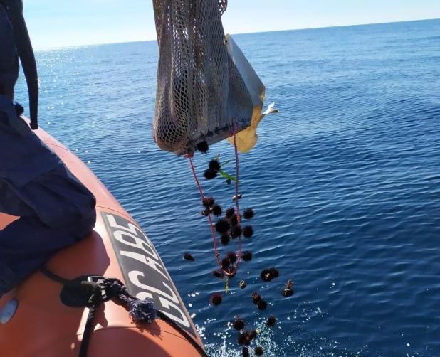 ricci di mare sequestro