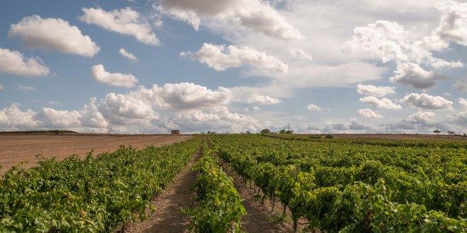 17.02.2021 - Fotovoltaico selvaggio, nuova minaccia nella terra dei vini salentini