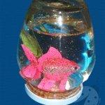 Acquario con un barattolo di vetro
