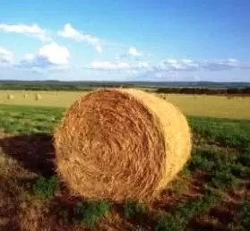 Ecco come calcolare l'indennità di disoccupazione agricola erogata dall'INPS