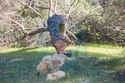 tala-pinar-piedrahincada-11