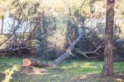 tala-pinar-piedrahincada