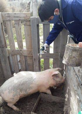 RELEVAMIENTO SOCIOPRODUCTIVO Y VACUNACIÓN DE ANIMALES EN LAS BARDAS