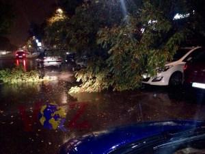 Árbol caído sobre vehículos estacionados en la calle Antonio López