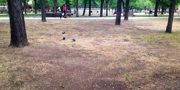 En el Egido es donde se situarán algunas de las zonas para las mascotas