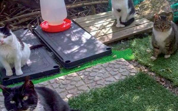 Comienza el control de las colonias felinas en Pinto