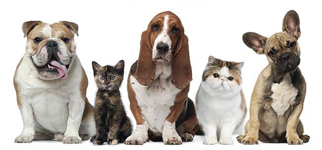El Ayuntamiento de Pinto organiza una charla online a través de la aplicación Zoom sobre leishmaniosis, enfermedad que afecta a las mascotas