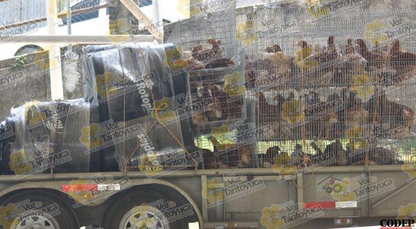 Entregan proyectos de gallinas ponedoras y paquetes de laminas en Tantoyuca | LVDT