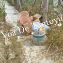 Fétidos olores movilizan a cuerpos de seguridad, en Tantoyuca | LVDT