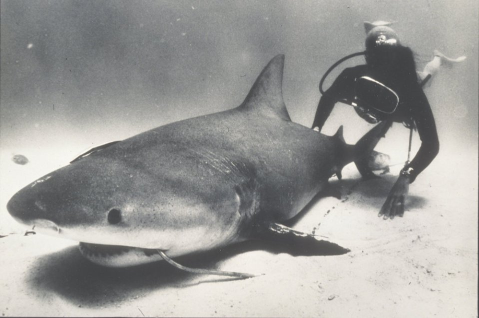 Shark Lady Eugenie Clark in 1974