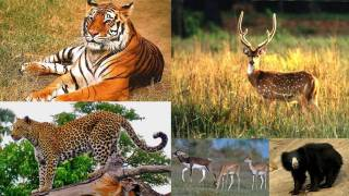 Coherence of laws which safeguard fauna