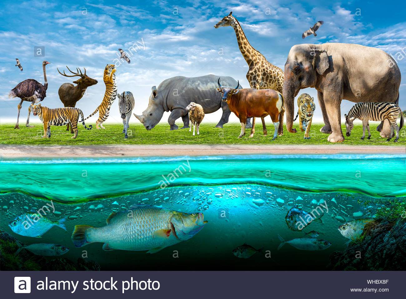 wildlife conservation day wild animals to the home or wildlife protection WHBX8F A RESEARCH ON WILDLIFE PROTECTION LAWS – CRIMES AGAINST INNOCENCE