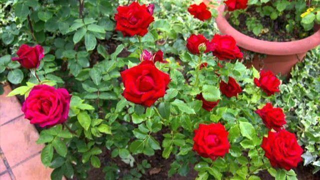 Cómo mantener las flores frescas 1
