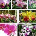 Cómo cuidar las orquídeas del jardín 3