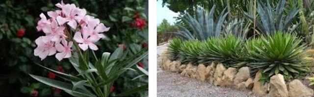Plantas de escaso mantenimiento 3