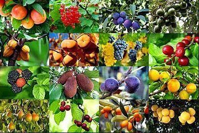 frutas que embellecen la piel